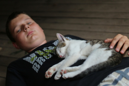kočka - spící